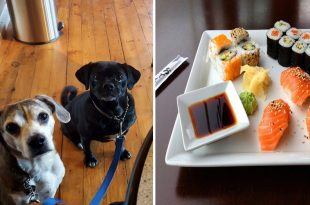 Pop- Up Sushi Bar For Pet Dogs_1