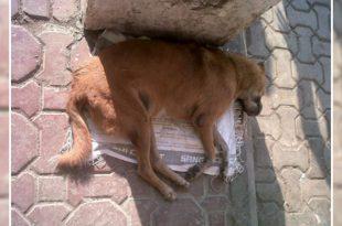 Stray dog died