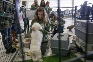 dog adoption events