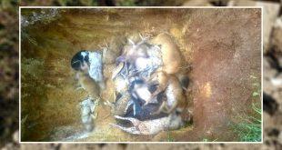 mass killing stray dogs