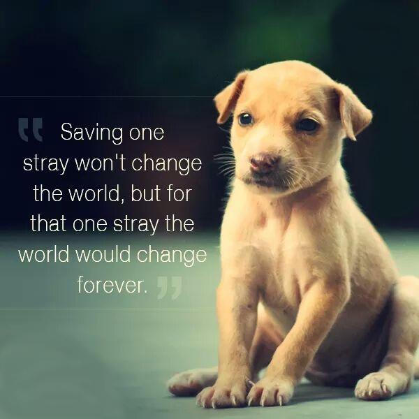 Adopt a stray dog