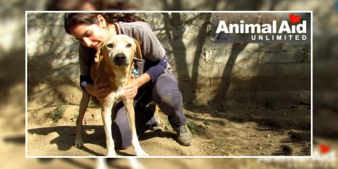Animal Aid Unlimited rescued dog