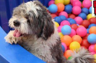 India's Biggest Pet Fed Festival