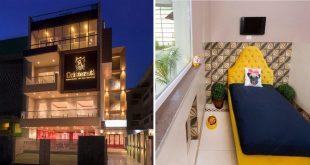 Critterati India's First Luxury Hotel