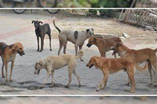 Stray dog attacks in Mysuru