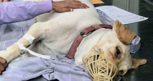 Strays as blood donors for pet dogs