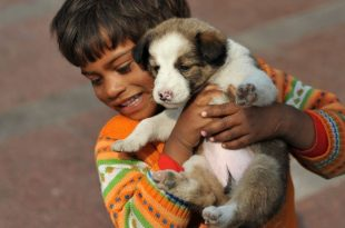 30 Stray Dogs Find New Home In Nagpur