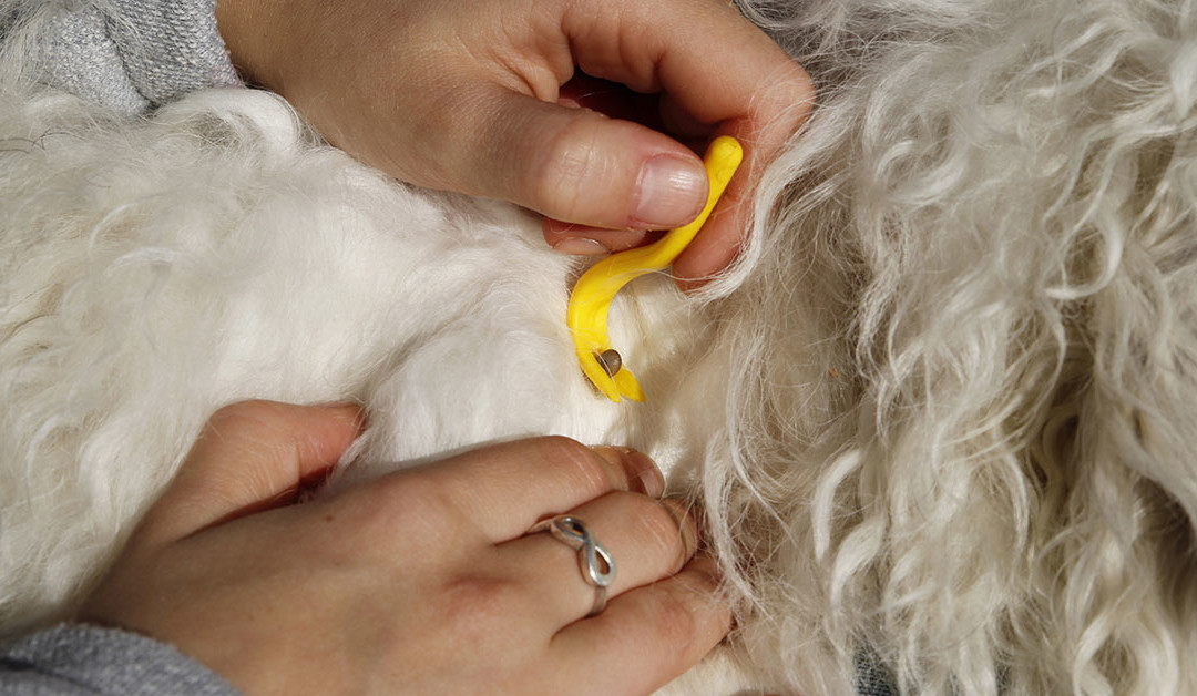 Canine Paralysis Symptoms, Causes And Treatment | DogExpress