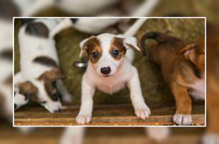 Checklist for dog adoption