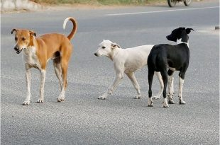 Dog pound in Panchkula