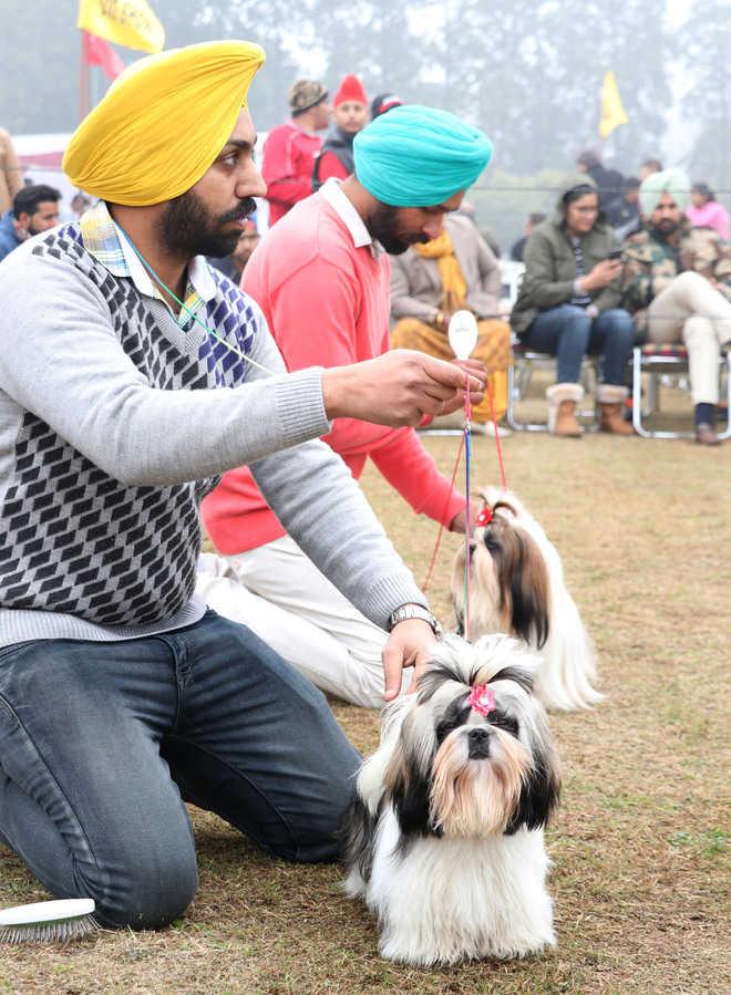dog breeds dog show