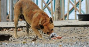 Stray dog posioned