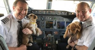 Airlines Rescues 62 Dogs