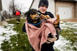 dog rescued in England