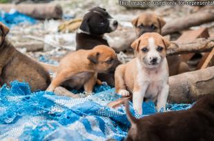 9 puppies killed