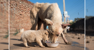Help Stray Dogs