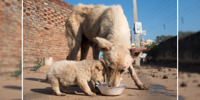 5 Ways To Help Stray Dogs In Your Neighborhood