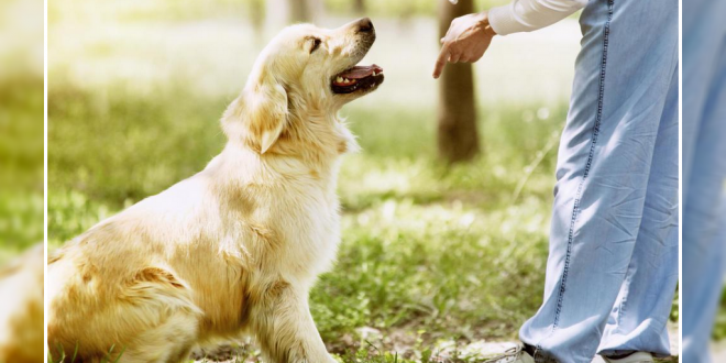 Mistakes Dog Owners Make