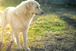 Summer health problem in dogs