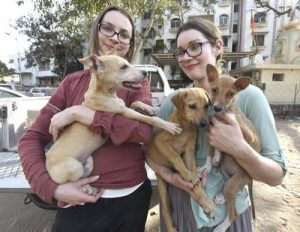 Foreigners adopted stray dogs