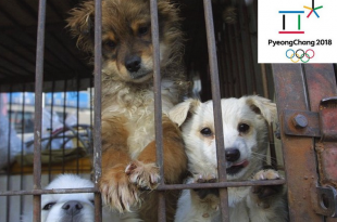 stop dog meat