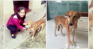 street dog of India