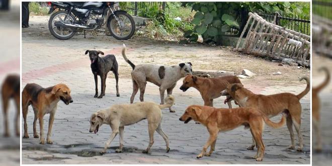 Stray dog bite cases