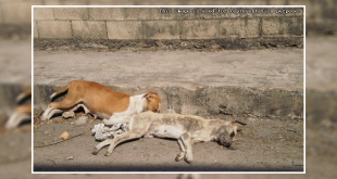 Stray dog poisioned