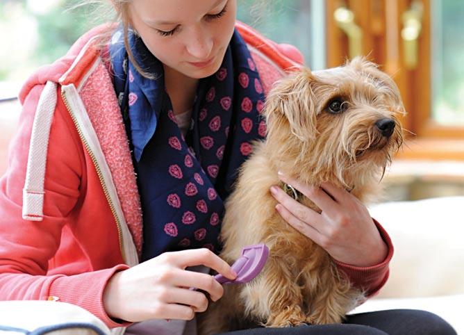 Grooming your pet