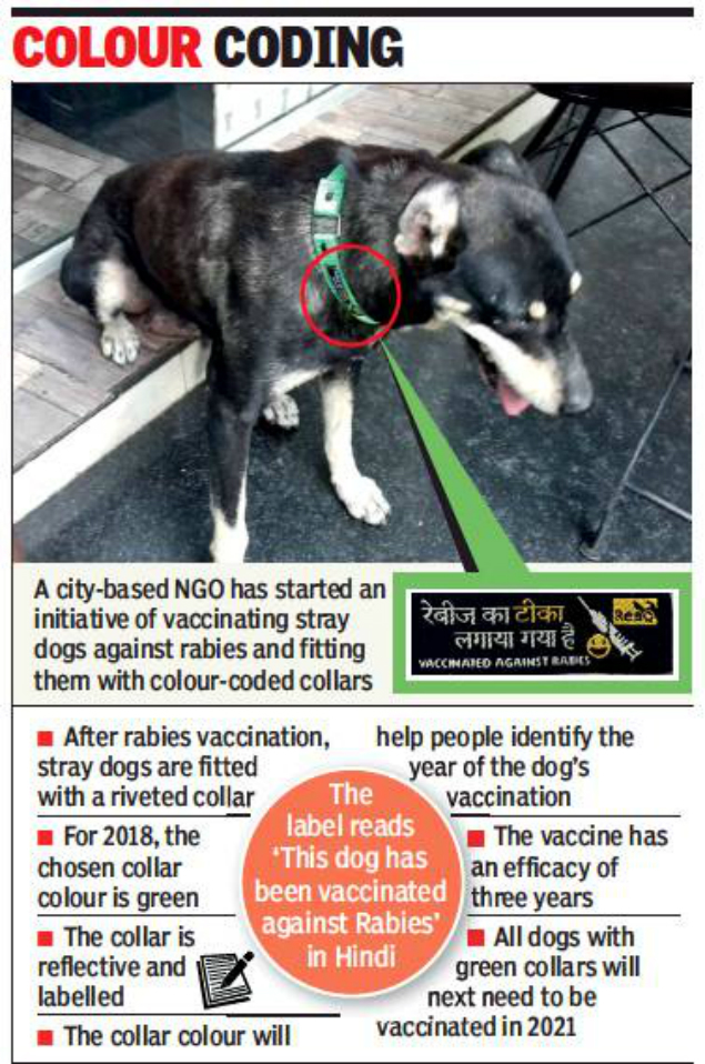 rabies vaccinated