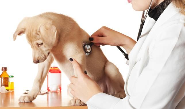 Pet regular check up