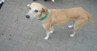 Stray dog with green coller