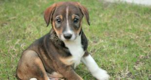 Stray dog puppy