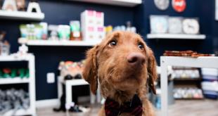 pet industry