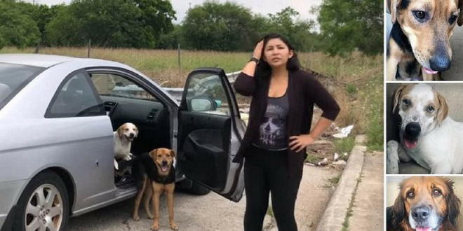 A woman abandoning four dogs