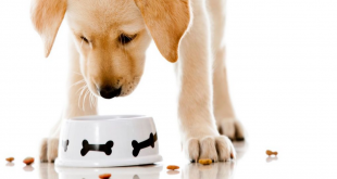 the best grain free dog food