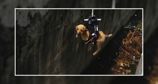 Drone To Rescue A Drowning Puppy