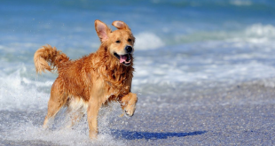 How to protact your dog this summer