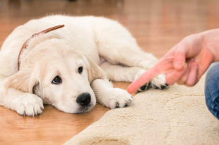 Importance of deworming in dogs