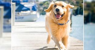Pet Dog's Body Type According To Ayurveda