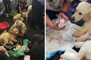 Service Dog Gives Birth