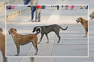 Stray dog at sukhna