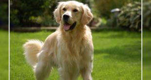 dog immune system,