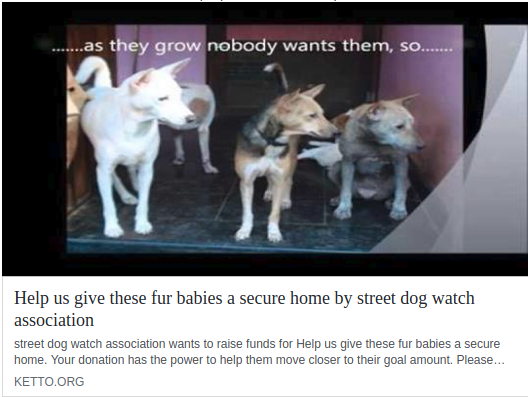 donation for stray dogs