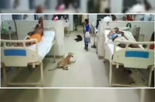 stray dogs in a hospital