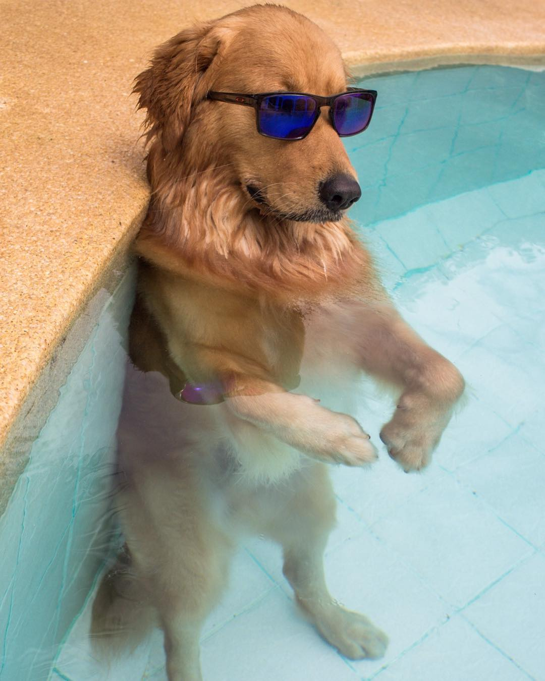 I am cool dog