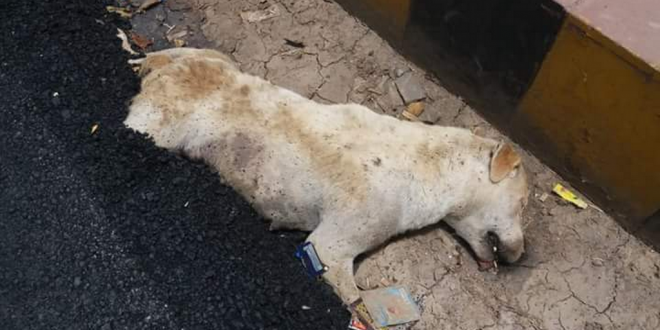 A Dog Buried Alive While Sleeping On A Road In Agra