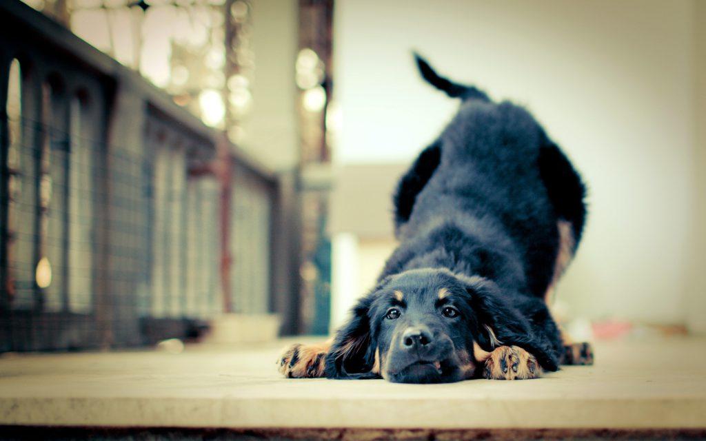 Happy-Puppy
