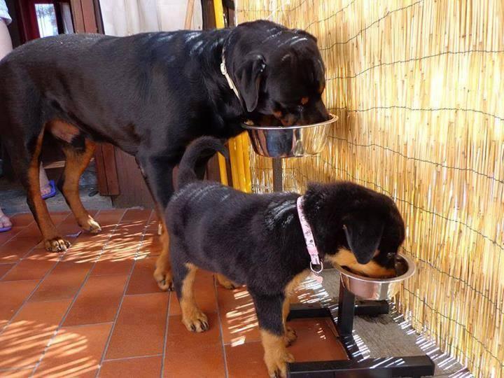 Pita dog eating