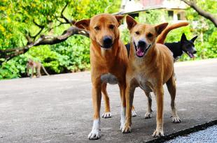 Stray Dogs Adoption